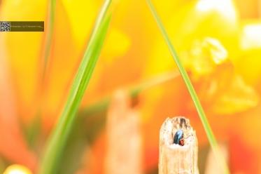 Käfer, Rektum